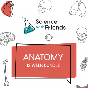 Anatomy Bundle